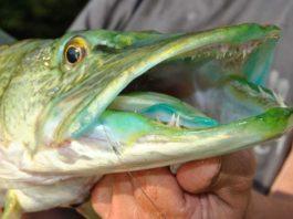 Smaragdsee aus dem Grillensee