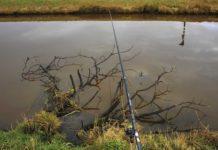 Klassischer Hotspot: versunkene Bäume oder Äste. Problemlos lässt sich der Köderfisch hier mit der langen Rute servieren.
