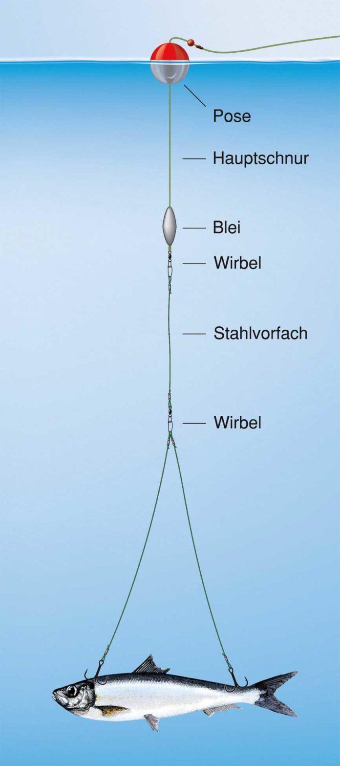 Am Schaukel-System halten auch weiche Sardinen. Zeichnung: U. Koch