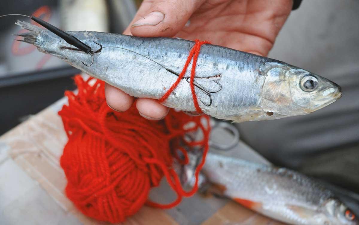 Balzer Matze Koch Köderfischsystem für mehrere Köder 10 12,5 g Zubehör NEU
