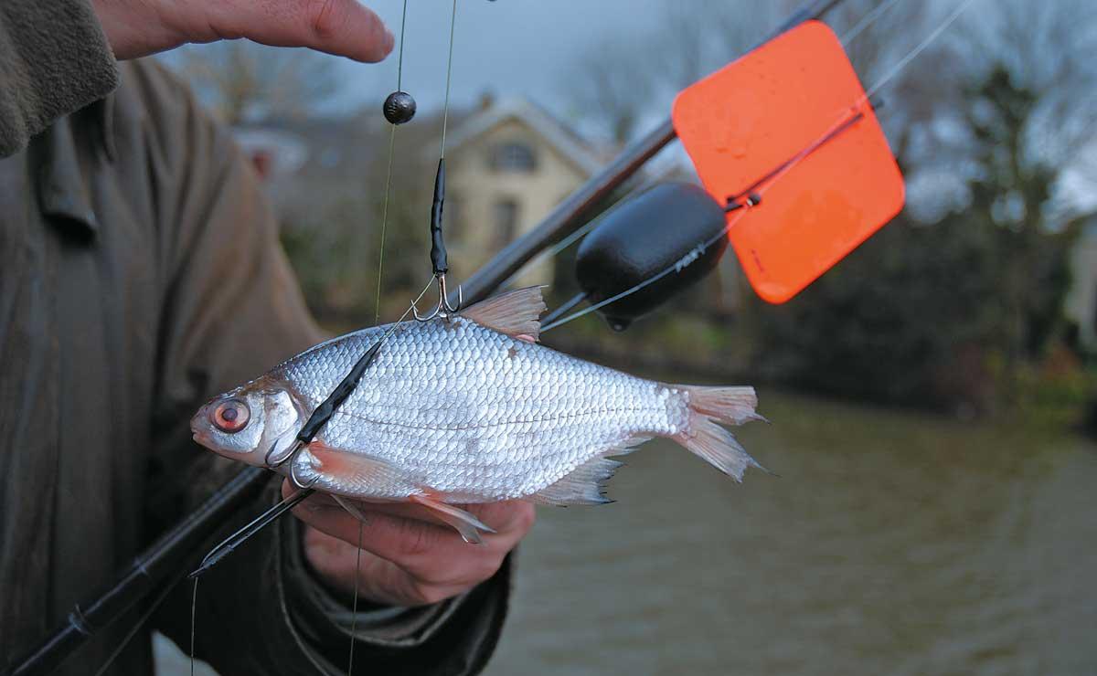 Vom Winde verweht: An der Segelpose treibt der waagerecht angeköderte Weißfisch weit nach draußen.