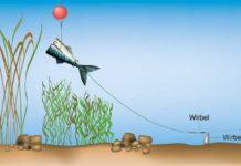 Das Baitpopper-Vorfach gewährleistet, dass der Köderfisch nicht im Kraut oder Schlamm versinkt.