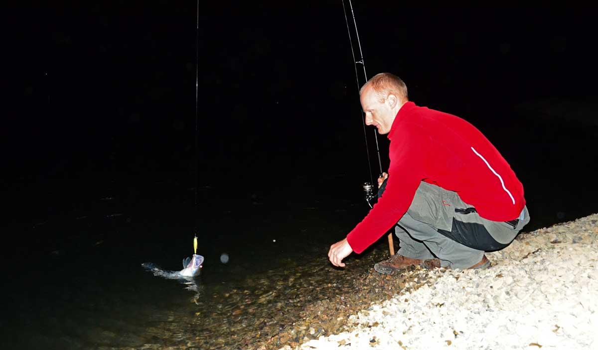 Uferangler haben nachts beste Chancen auf Erfolg, die Zander rauben flach.