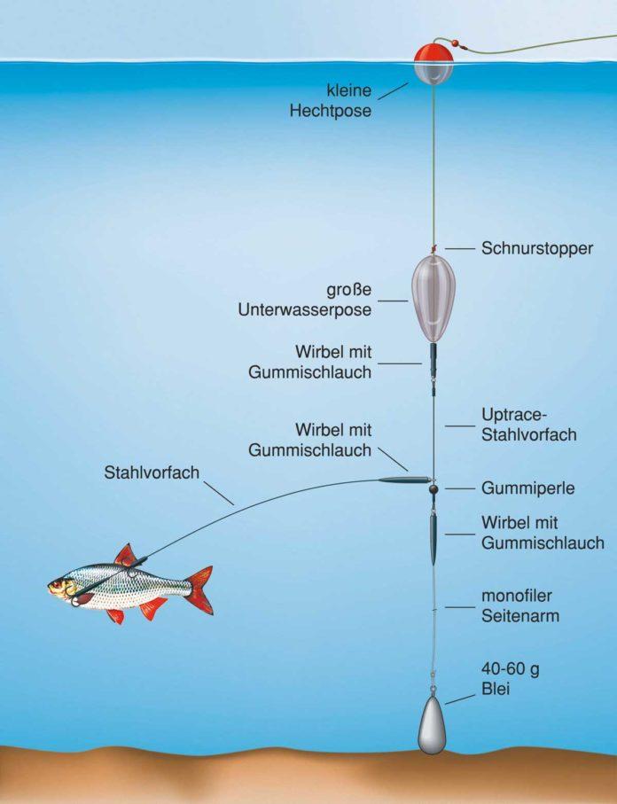 Arbeitsteilung: Die kleine Hechtpose zeigt den Biss an, die Unterwasserpose hält den Köderfisch über Grund. Zeichnung: U. Koch