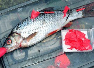 Signal zum Angriff: Grelles Rot provoziert die Hechte in jedem Gewässer.